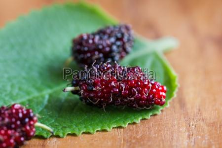 maulbeere