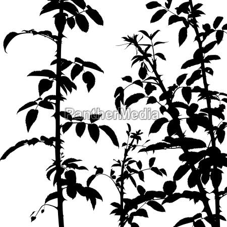 thorny shrub silhouette