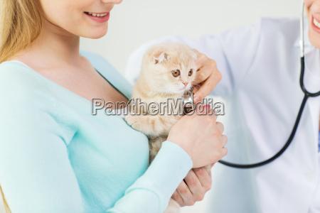 nahaufnahme von tierarzt mit stethoskop und