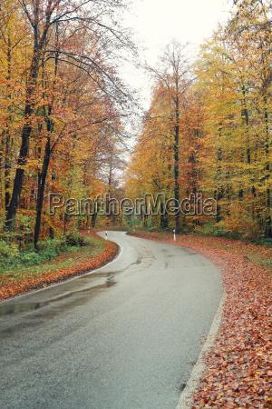 danger tree leaves traffic transportation road