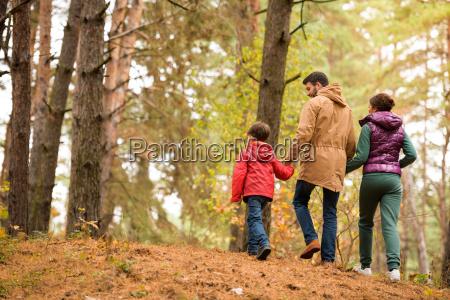 familie, zu, fuß, im, herbst, wald - 20116405