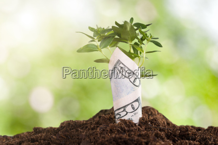 sapling wrapped in dollar bill