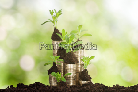 small plant on stacked coins