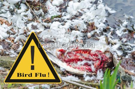 symbolisch allgemeine praevention gegen vogelgrippevirus