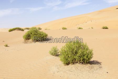 dunes in the liwa oasis uae