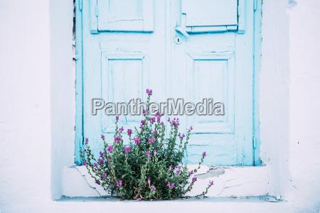 blau fahrt reisen farbe bluete erbluehen