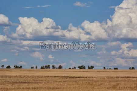 endless barren field