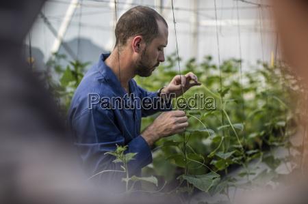 landwirtschaft ackerbau schutzanzug konzentration gaertner anbau