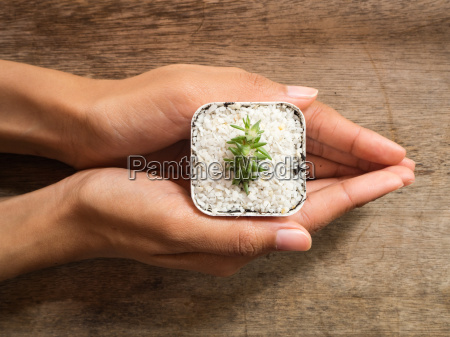 woman hand holding cactus in pot