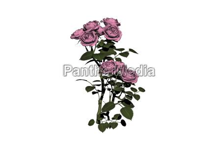 rosenstock freigestellt