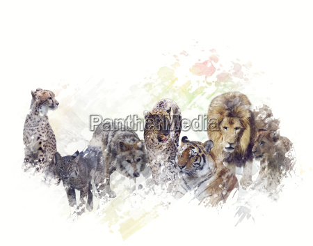 wilde tiere aquarell