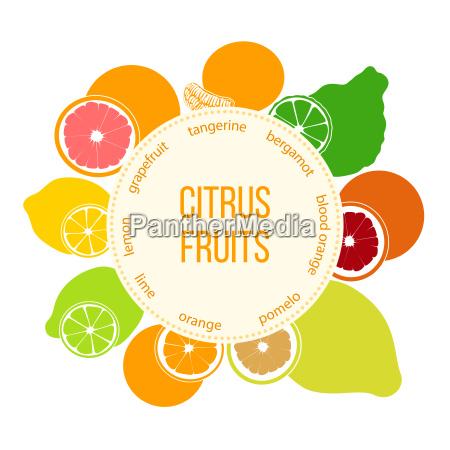 citrus fruits flat set bergamot lemon