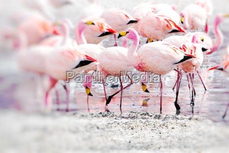 flamingos auf see in den anden