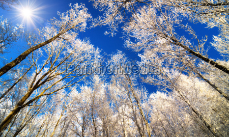 winter magic forest with snowy tree