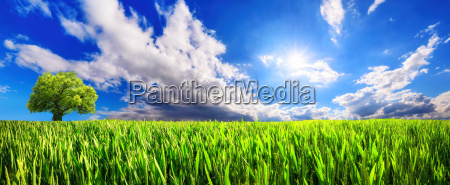 panoramic landscape green field with lone