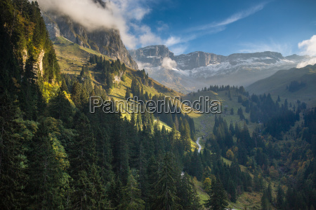 lovely alpine scenery with beautiful forest
