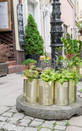 planted olive oil boxes in front