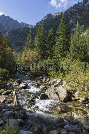 roztoka stream in roztoka valley tatra