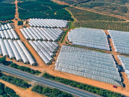 luftaufnahme obst und orangenbaeume plantage