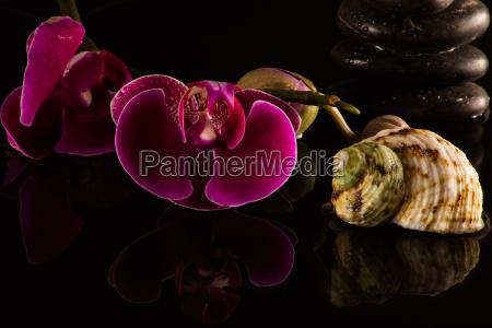 rote orchideen mit einer wasserspiegelung und