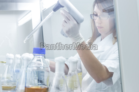 life science researcher grafting bacteria