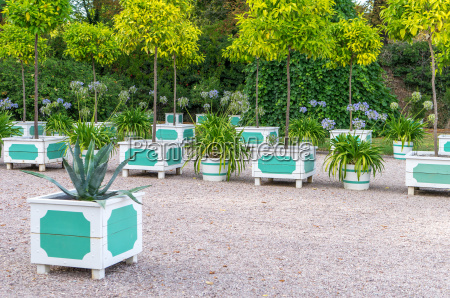 citrus trees agaves and blue lilies