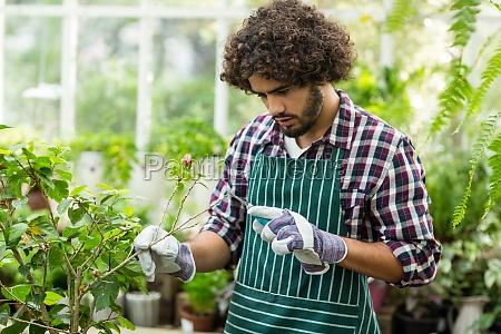 gardener pruning plants at greenhouse