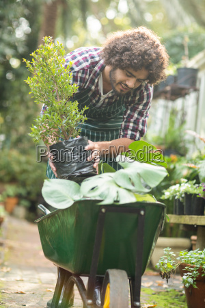 male gardener keeping potted plants on