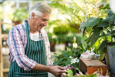 male gardener examining plants
