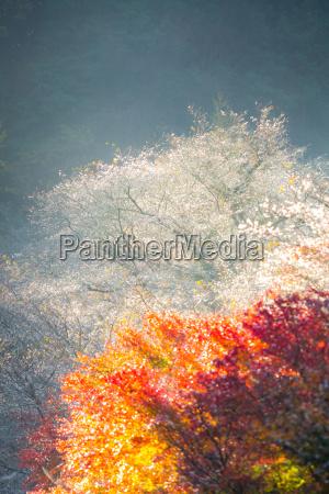 nebel fruehe japan wald forst morgen