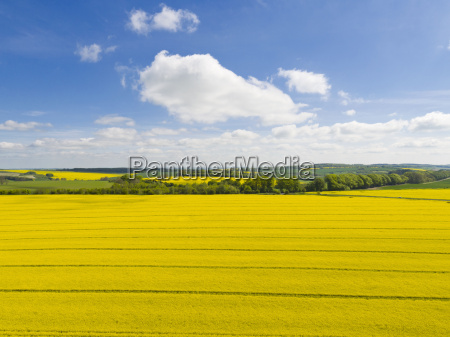 aerial view of oilseed rape crop