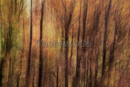 abstract tree pattern with autumn colors