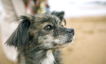 dog looking sideways on the beach