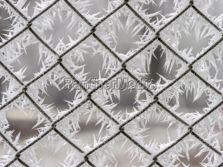 frost on a wire mesh fence