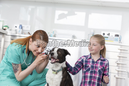 dog is being examined in veterinary