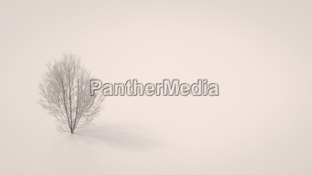 3d rendering bare maple tree on