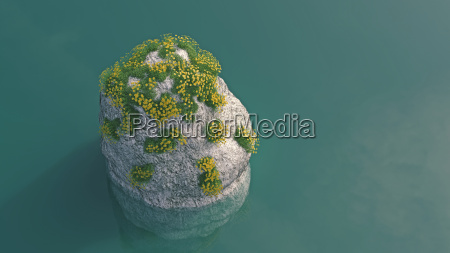 blooming plants growing on rock in
