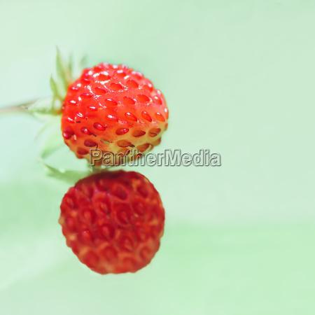 closeup nahaufnahme wild acht form erdbeere