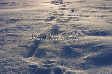 schnee weht im winter snow