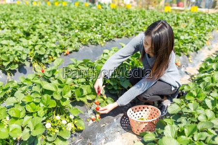 junge frau die erdbeere auf dem