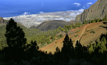 forest crown natural park in teide