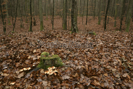 bialowieza forest is a valuable rest