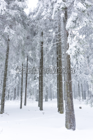 sauerland in winter