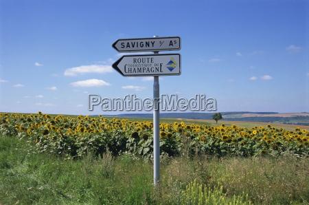 fahrt reisen europa sonnenblumen horizontal frankreich