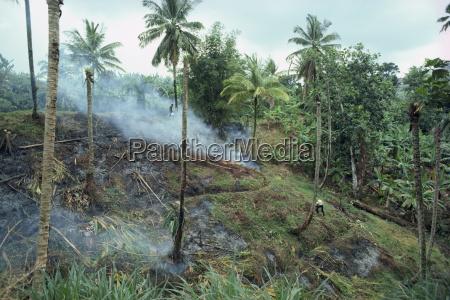 schleudern und verbrennen landwirtschaft st lucia