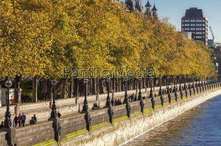 people walking beneath trees bearing autumn