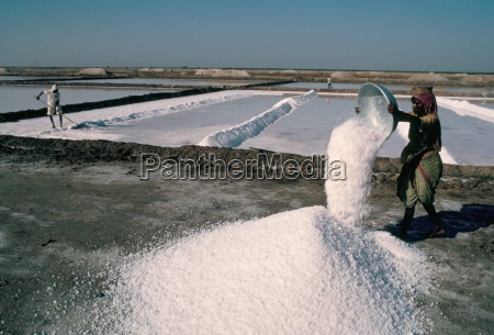 salt pans kutch district gujarat india