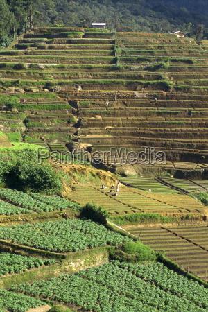 landwirtschaft nuwara eliya gebiet sri lanka