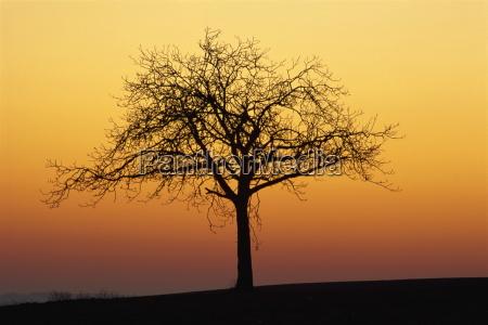 bare tree silhouetted at dawn dordogne