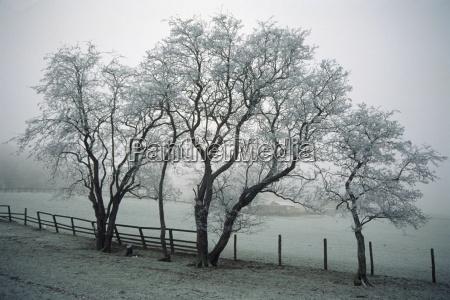 fahrt reisen baum baeume winter botanik